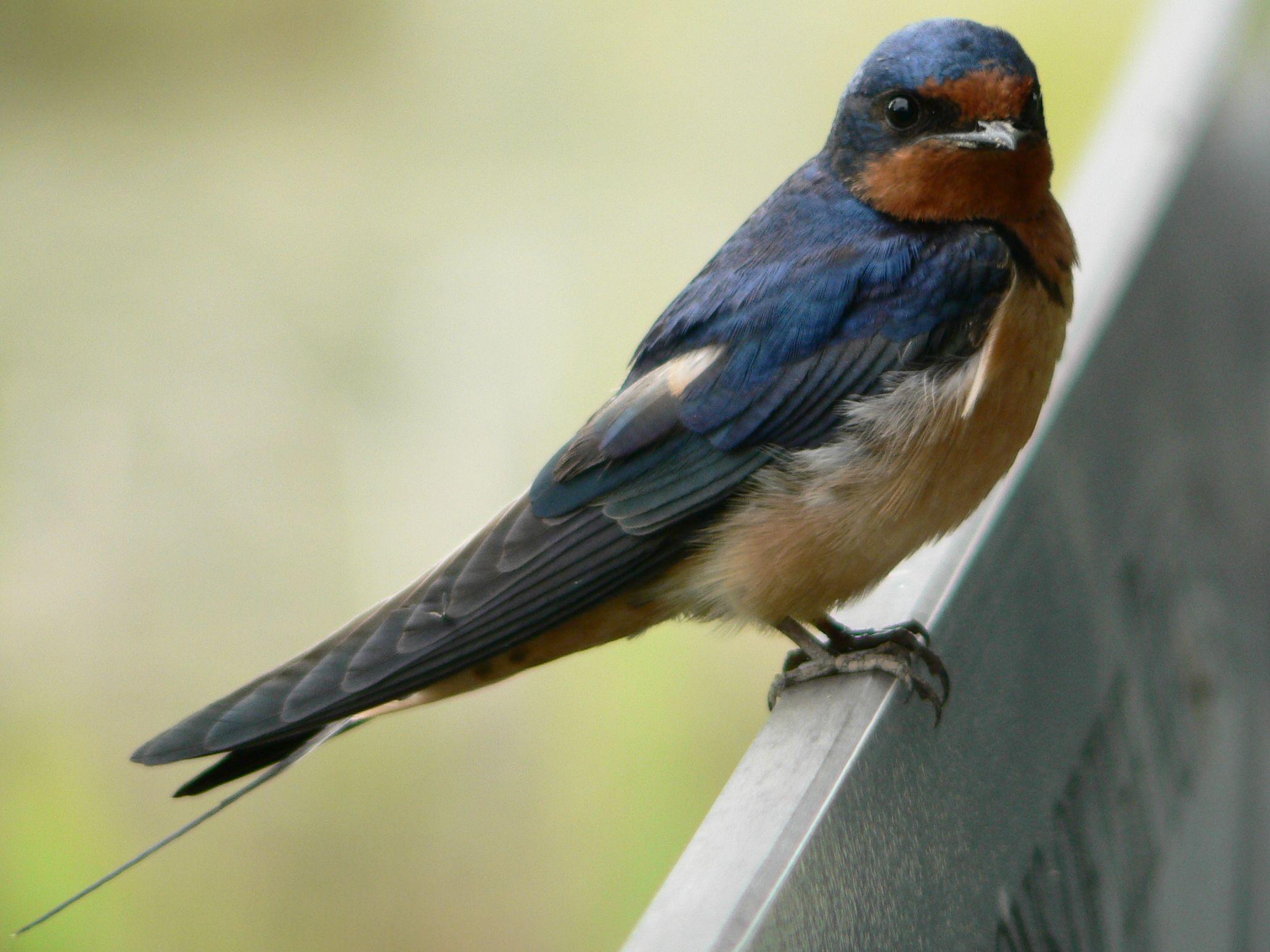 fogyás madár út
