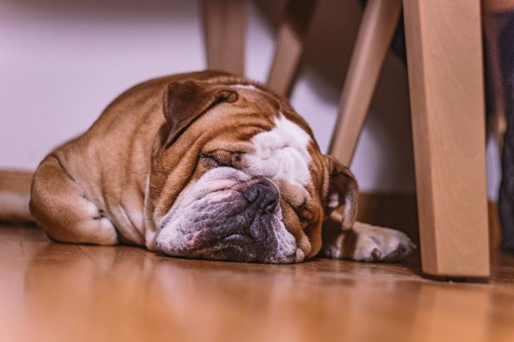 A kövér eb fogyókúrája | Kutyatár | Kézikönyvtár