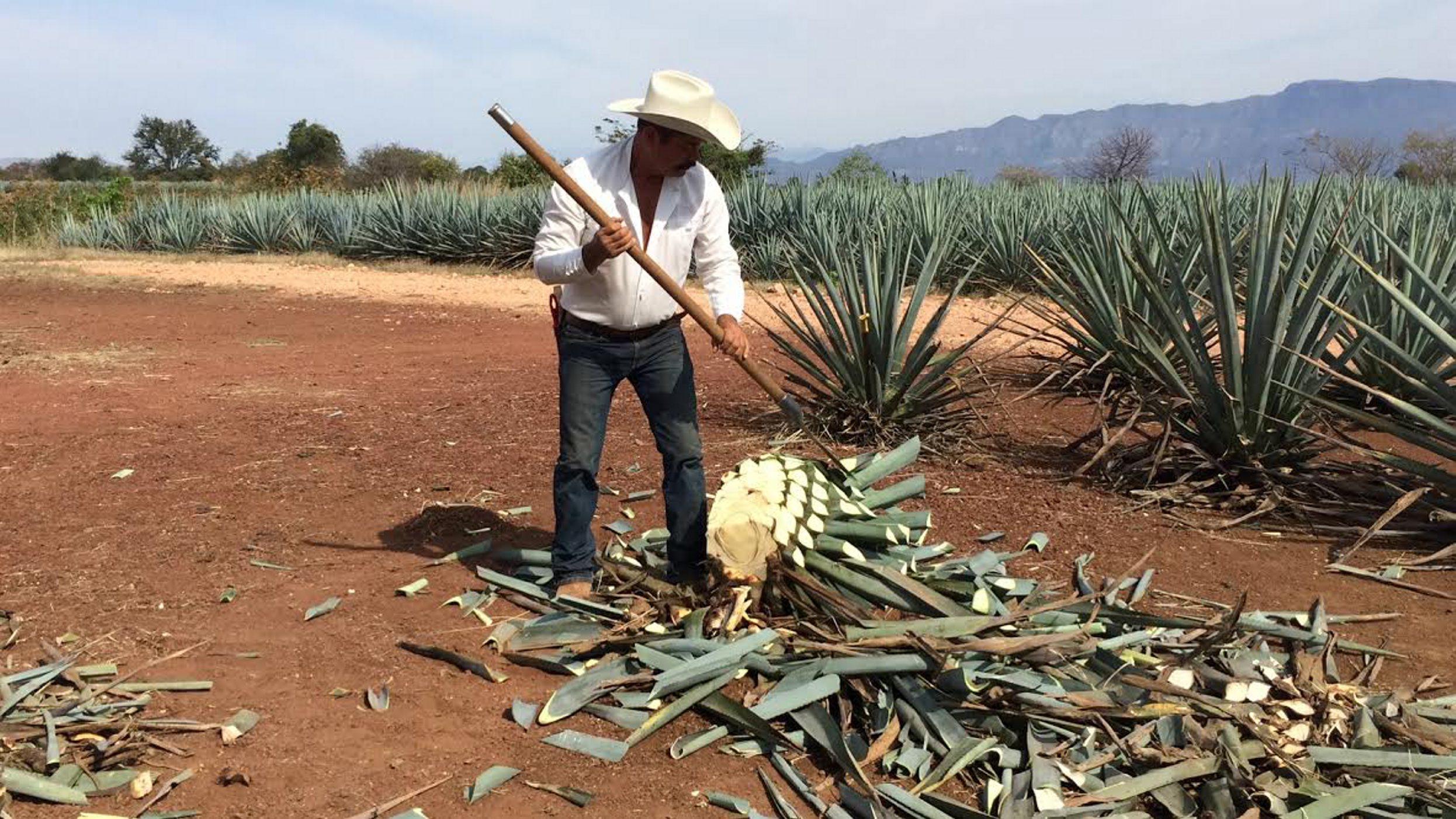 Kokain vagy tequila: melyik ártalmasabb?