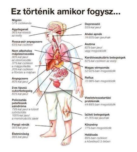 Túlsúly (elhízás), és hatékony fogyás | Adaptogének