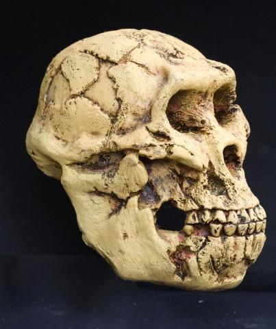 koponya zsírégető