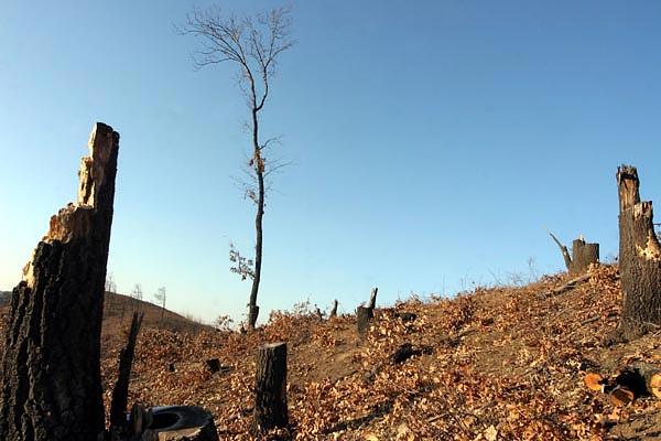 Archívum: Hová tűnt az arlói erdő? - kerepesiek.hu